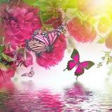 Boeket van roze pioenen Stock Afbeelding