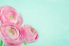 Boeket van roze ranunculus op lichtblauwe achtergrond Royalty-vrije Stock Afbeelding