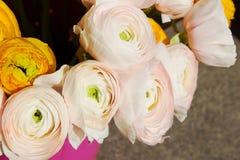 Boeket van roze ranunkulus Stock Foto's
