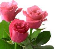 Boeket van roze roze die bloemen op wit worden geïsoleerd Stock Foto