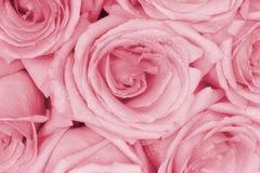 Boeket van roze rozen Royalty-vrije Stock Foto's