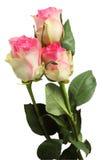 Boeket van roze rozen Royalty-vrije Stock Afbeeldingen