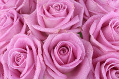 Boeket van roze rozen over wit Royalty-vrije Stock Foto's
