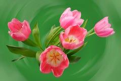 Boeket van roze tulpen Stock Afbeelding