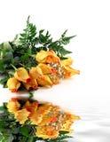 Boeket van rozen. Stock Foto's