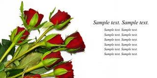 Boeket van rozen Royalty-vrije Stock Fotografie