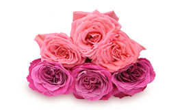 Boeket van rozen Royalty-vrije Stock Foto's