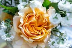 Boeket van rozen Charlotte en duizendbladparel Royalty-vrije Stock Foto