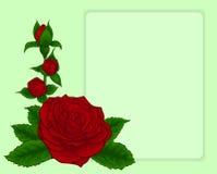 Boeket van rozen. ontwerp frame met bloemenpatroon. Stock Fotografie