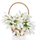 Boeket van sneeuwklokjebloemen in mand op witte backgro wordt geïsoleerd die Royalty-vrije Stock Foto's