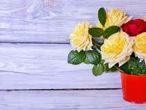 Boeket van tot bloei komende rozen in een oranje emmer Stock Afbeelding