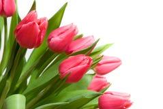 Boeket van tulpen royalty-vrije stock afbeelding