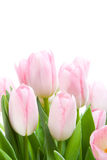 Boeket van tulpen Stock Foto's