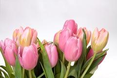 Boeket van tulpen royalty-vrije stock foto's