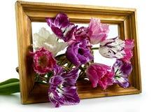 Boeket van tulpen in een kader op een witte achtergrond Stock Foto