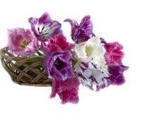 Boeket van tulpen in een kader op een witte achtergrond Royalty-vrije Stock Fotografie