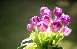 Boeket van tulpen in het zonlicht Stock Foto