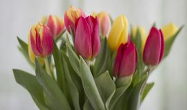 Boeket van tulpen op een lichte achtergrond stock afbeelding