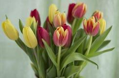 Boeket van tulpen op een lichte achtergrond stock foto's