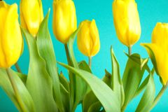 Boeket van tulpen op kleurenachtergrond Stock Afbeeldingen