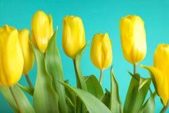 Boeket van tulpen op kleurenachtergrond Royalty-vrije Stock Foto's
