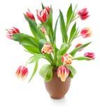 Boeket van tulpen op wit Royalty-vrije Stock Afbeeldingen