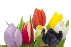 Boeket van Tulpen op witte achtergrond royalty-vrije stock foto