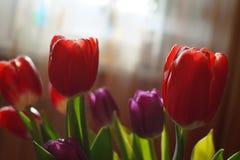 Boeket van tulpen voor 8 Maart-Vrouwendag royalty-vrije stock afbeeldingen