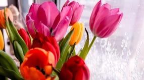 Boeket van tulpenbloemen die zich bij het venster in de winterdag bevinden stock fotografie