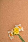 Boeket van verschillende kleuren van gele narcissen op cork achtergrond naties Stock Foto's