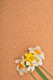 Boeket van verschillende kleuren van gele narcissen op cork achtergrond naties Stock Afbeelding