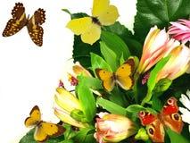Boeket van verse bloemen met vlinders Stock Fotografie