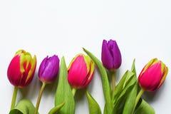 Boeket van vijf kleurrijke tulpen op witte achtergrond stock foto's