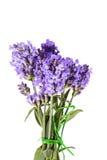 Boeket van violette die lavendelbloemen op witte achtergrond worden geïsoleerd stock afbeeldingen