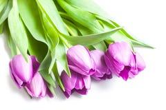 Boeket van violette tulpen Stock Afbeeldingen