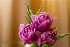 Boeket van violette tulpen Stock Foto