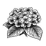 Boeket van viooltjes - schets Royalty-vrije Stock Foto
