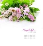 Boeket van wilde bloemen Royalty-vrije Stock Foto