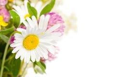 Boeket van wilde bloemen die over wit worden geïsoleerd Royalty-vrije Stock Foto's