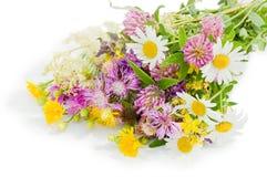 Boeket van wilde bloemen die over wit worden geïsoleerdT Royalty-vrije Stock Afbeeldingen