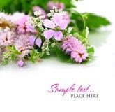Boeket van wilde bloemen op een witte achtergrond Stock Afbeelding