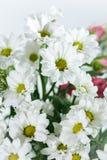 Boeket van witte chrysanten stock fotografie