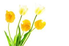 Boeket van witte en gele tulpen stock foto's