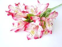 Boeket van Witte en Roze bloemen Alstroemeria royalty-vrije stock afbeeldingen