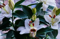 Boeket van witte lelies Mooie witte lelies royalty-vrije stock foto