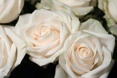 Boeket van witte rozen royalty-vrije stock fotografie