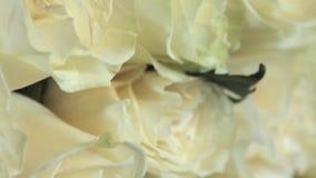 Boeket van witte rozen stock footage