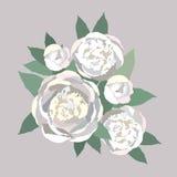 Boeket van zachte witte bloemenpioenen Stock Fotografie