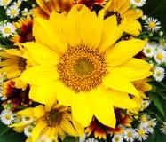Boeket van zonnebloemen en madeliefjes Royalty-vrije Stock Afbeeldingen
