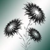 Boeket van zwarte bloemen Royalty-vrije Stock Foto's